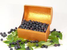 Free Bilberries Stock Photo - 5476340