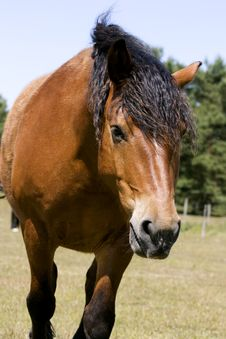 Free Horse Royalty Free Stock Photography - 5478347
