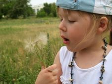 Little Girl Blowing Dandelion Seeds Stock Photos
