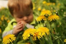 Free Child With The Dandelion Stock Photo - 5478530