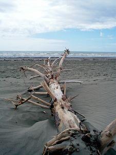 Free Driftwood Stock Photo - 5478720
