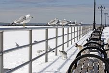 Free Gulls Waiting For Weather Royalty Free Stock Photography - 5478887
