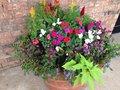 Free FLOWER GARDEN Royalty Free Stock Photo - 54795095