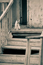 Free Cat On An Old Porch Royalty Free Stock Image - 5481166