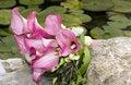 Free Kala Bridal Bouquet Royalty Free Stock Photos - 5483108