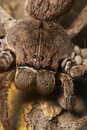 Free Close Up Of A Rain Spider Royalty Free Stock Image - 5487206