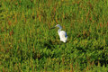 Free Egret In The Wetlands Royalty Free Stock Photography - 5487457