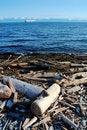 Free Seaside Driftwoods Stock Photos - 5487743
