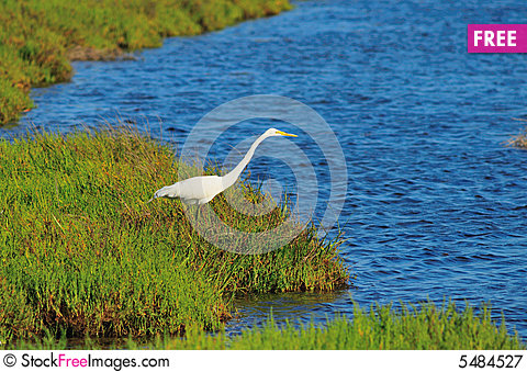 Free Egret Looking Out To Water Royalty Free Stock Photography - 5484527