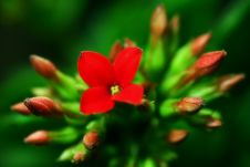 Free Red Flower And Green Leaf Royalty Free Stock Photo - 5480525