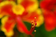 Free Flamming Flower Stock Photo - 5480970