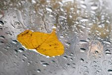 Free Leaf On A Wet Glass Royalty Free Stock Photos - 5481328