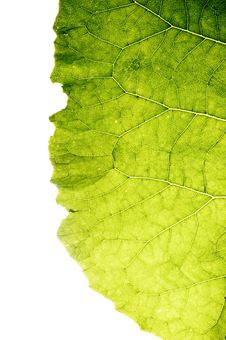 Free Leaf Isolated Royalty Free Stock Photo - 5481705