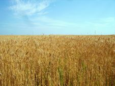 Free Crop Fields Royalty Free Stock Photo - 5481975