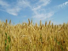 Free Crop Fields Royalty Free Stock Image - 5481986