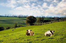Free Cow Farmland. Stock Images - 5482874