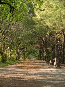 Free Wood Lane Under Sunlight Stock Images - 5482954