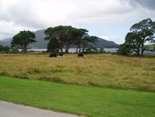 Free Irish National Park Killarney Stock Photo - 5483430