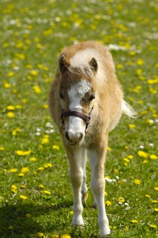 Free Foal Royalty Free Stock Images - 5483819