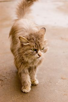 A Cat In A Farm Of Beijing Royalty Free Stock Images