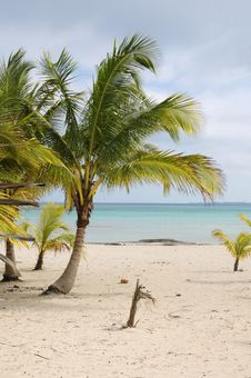 Free Tropical Beach View Royalty Free Stock Photos - 5484408