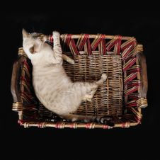 Free Bengal Cat On A Basket Stock Photography - 5484742