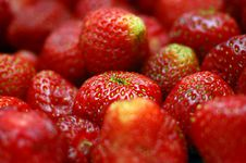 Free Strawberries Royalty Free Stock Photo - 5485125