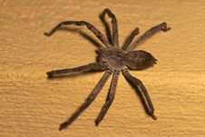 Free Rain Spider On A Wall Stock Photo - 5486940