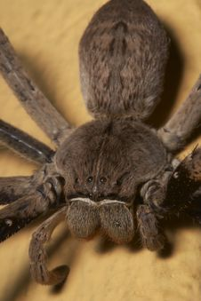 Free Close Up Of A Rain Spider 1 Royalty Free Stock Images - 5487019