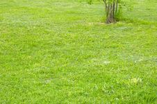 Free Green Lawn Stock Photography - 5487042