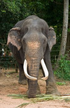 Free Elefant Stock Images - 5487504