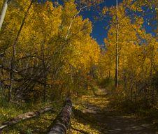 Free Autumn Walk Stock Photo - 5488790