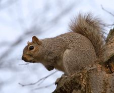 Free Squirrel On A Stump Stock Photo - 5488950