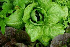 Free Mixed Greens Stock Image - 5489361
