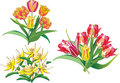 Free Tulip Bouquets On White Royalty Free Stock Photography - 5492127