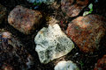 Free Stones Of Road Royalty Free Stock Image - 5494626
