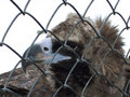 Free Condor In A Cage Stock Photo - 5495910