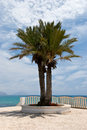 Free A Big Palm On The Sea - Promenade Royalty Free Stock Photo - 5499585