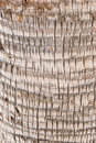 Free Bark Of A Tree-palm Bark Structure Stock Photography - 5499592