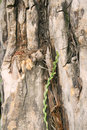 Free Tree Trunk Royalty Free Stock Photography - 5499627