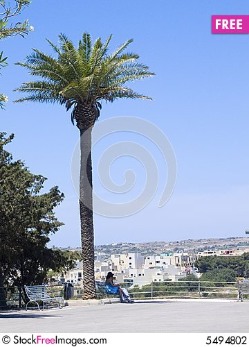 Free Palm Tree Stock Photography - 5494802