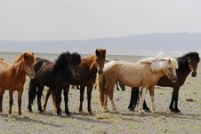 Free Horses In The Gobi Desert, Mongolia Royalty Free Stock Photography - 5490757