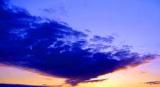 Dark-blue Bird. Royalty Free Stock Image