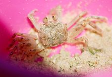Free A Tropical Crab Royalty Free Stock Image - 5491336