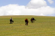 Free Horses Grazing In Mongolia Stock Photo - 5491420