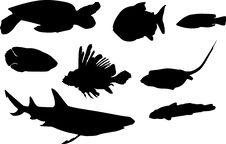 Free Turtle And Fish Silhouettes Stock Photos - 5491503