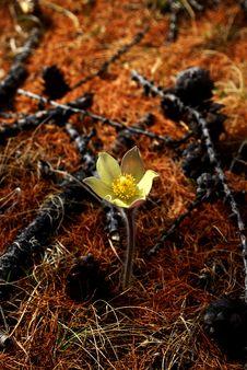 Free Yellow Flower Stock Photos - 5491643