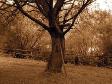 Free Sepia Tree Royalty Free Stock Photo - 5491655