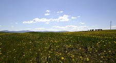 Free Fields Of Buttercups Stock Photos - 5491673