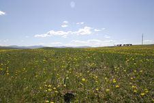 Free Fields Of Buttercups Stock Images - 5491694
